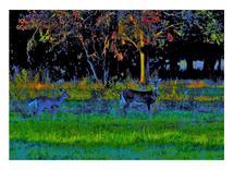 Velvet Deer by Richard Fasullo