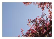 Sky Full of Flowers by Erin Jones Turner