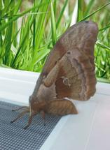 Moth by Cindy Jost