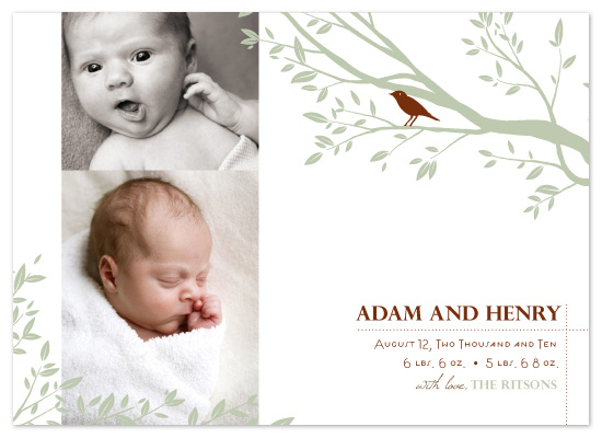 birth announcements - Baby bird by Raquel Salaro
