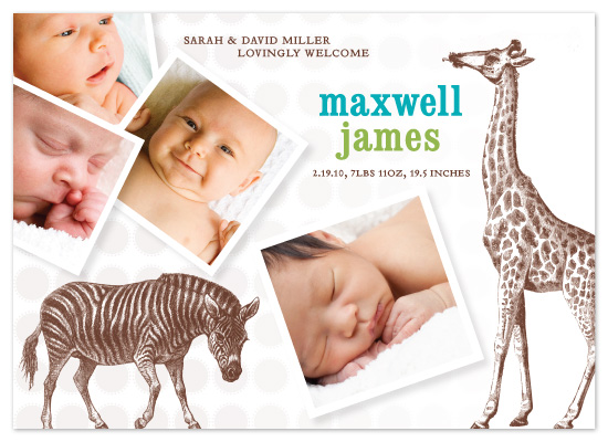 birth announcements - Baby of the Jungle by Allison Grynberg