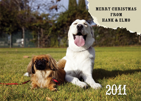 holiday photo cards - a chewed up holiday by Marna Schindler