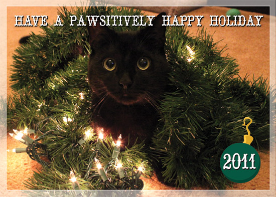 holiday photo cards - A Pawsitively Happy Holiday by Marna Schindler