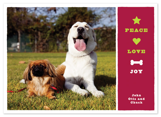 holiday photo cards - Dog Joy by Tracy White Taylor