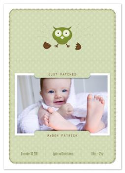 Just Hatched — Owl Birth Announcement