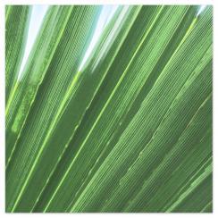 Honeymoon Palms