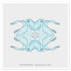 Color Pencil | Cephalopod NO.2