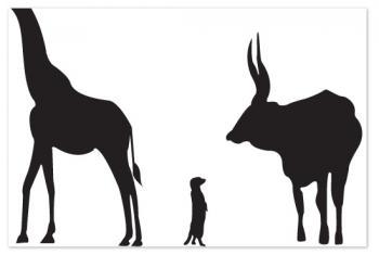 animal prints, educational design and decoration