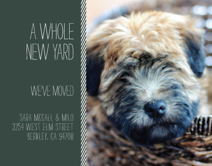 moving announcements - A Whole New Yard by Erika Tracy