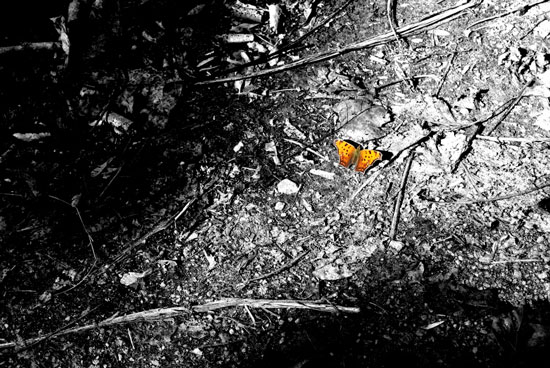 art prints - Orange Butterfly by Kristi Mickaliger