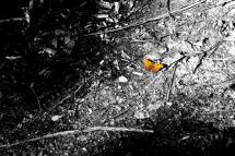 Orange Butterfly by Kristi Mickaliger