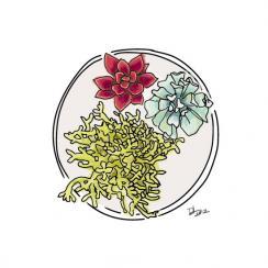 Succulent Love Series