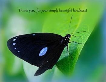 Simply Beautiful Kindness