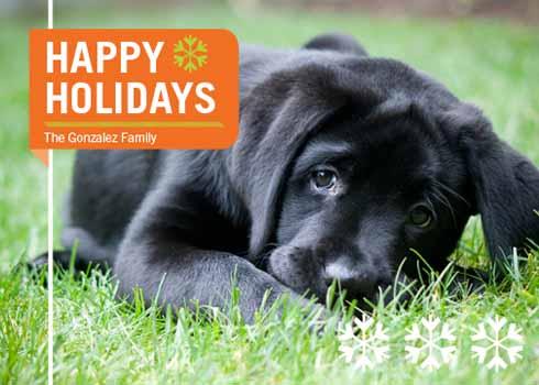 holiday photo cards - HappyHowlidays by Maui N Cupcake