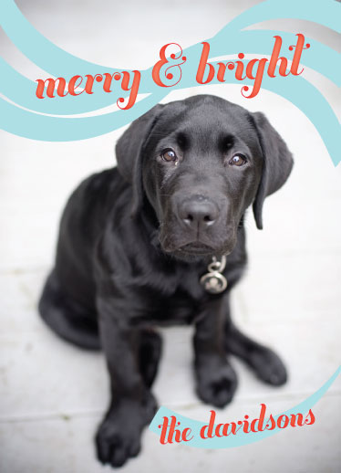 holiday photo cards - Merry Ribbon by Roseville Designs