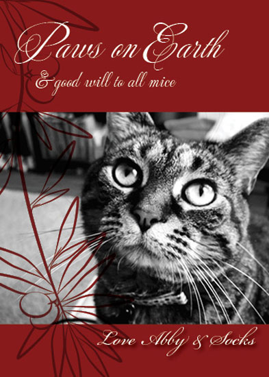 holiday photo cards - Paws on Earth by Kristi Mickaliger