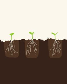 art prints - Transplanted Seedlings by Jorey Hurley