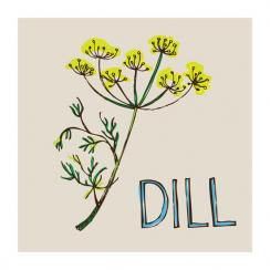 Kitchen Herbs - Dill