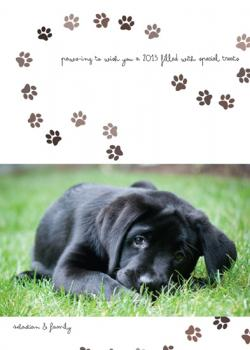 Paws-ing For 2013