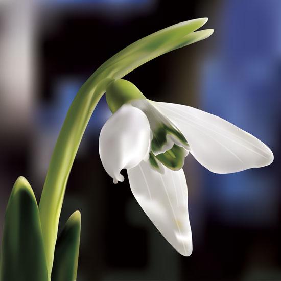 art prints - White Orchid by Jennifer Fuller