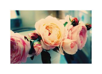 Vintage English Roses