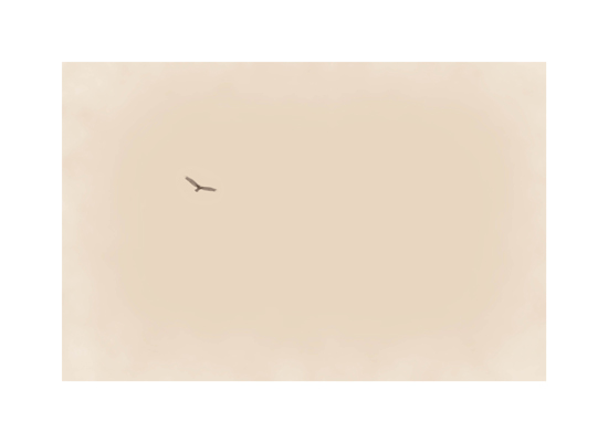 art prints - Soar by Paper and Parcel