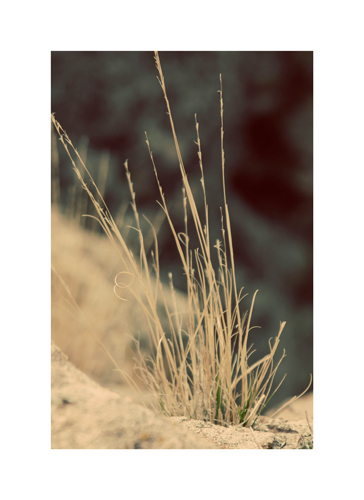 art prints - Blades of Grass by Brooke Chandler
