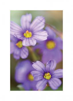 5 purple flowers