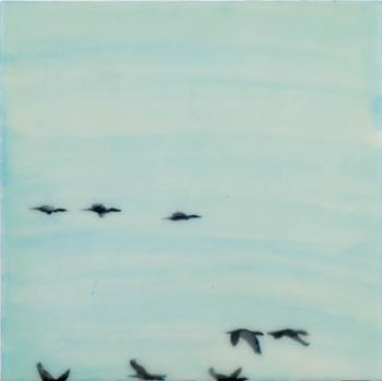 Geese, Lake Ontario
