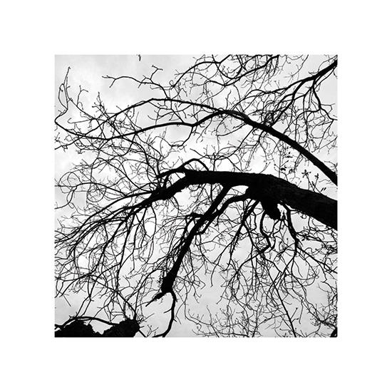 art prints - Branching Out by Becky Nimoy