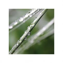 Morning Dew on Grass