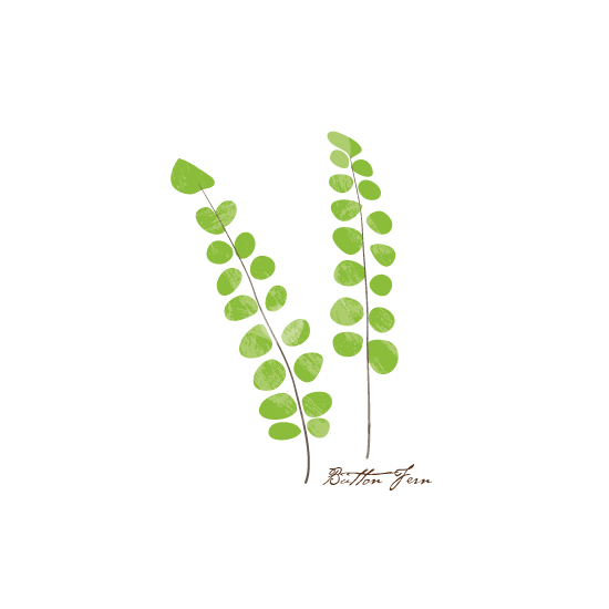 art prints - Button Fern by Becky Nimoy