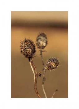 Prickly in the desert