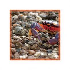 Crab Meet Crab
