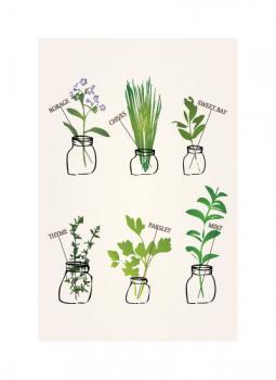 Mason Jar Herbs.