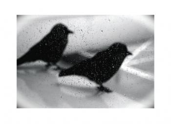 on wing - silouette
