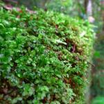 Nature Grows by NoOrdinaryJane
