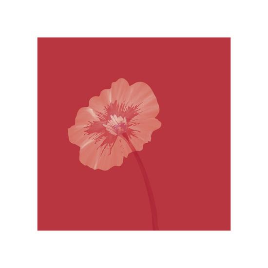 art prints - Petunia Bloom by Madeline