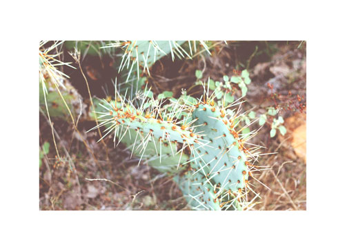 art prints - Desert Bloom by Rebekah Disch