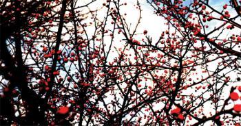 Blossoming Sky