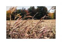 Harvest by Kristi