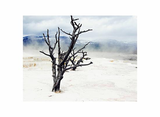 art prints - YellowstoneTree by Muffin Grayson