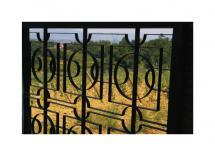 Tuscan Vineyard Fence by Jacquelyn Hardies
