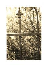 Iron Fence by Jacquelyn Hardies