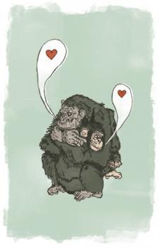 Chimpanzee Affection