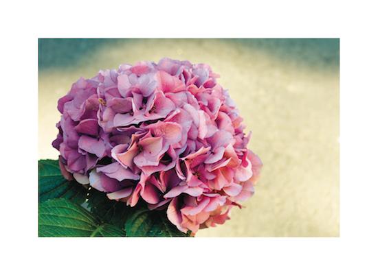art prints - Flower Powered by Alexandra Nazari