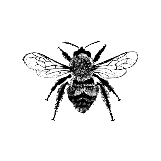 art prints - Botanical Bee Study No.179 by Kristine Hickcox