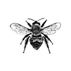 Botanical Bee Study No.179