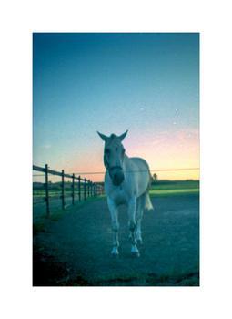 Analog horse & sunset