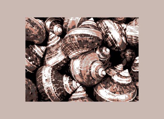 art prints - Shell Composition by Jana J